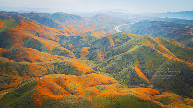 Superbloom of California poppies 2019.jp