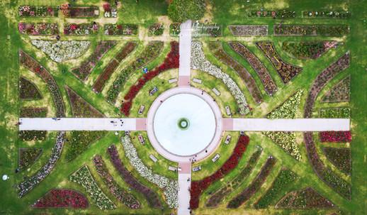 Municipal Rose Garden.jpg