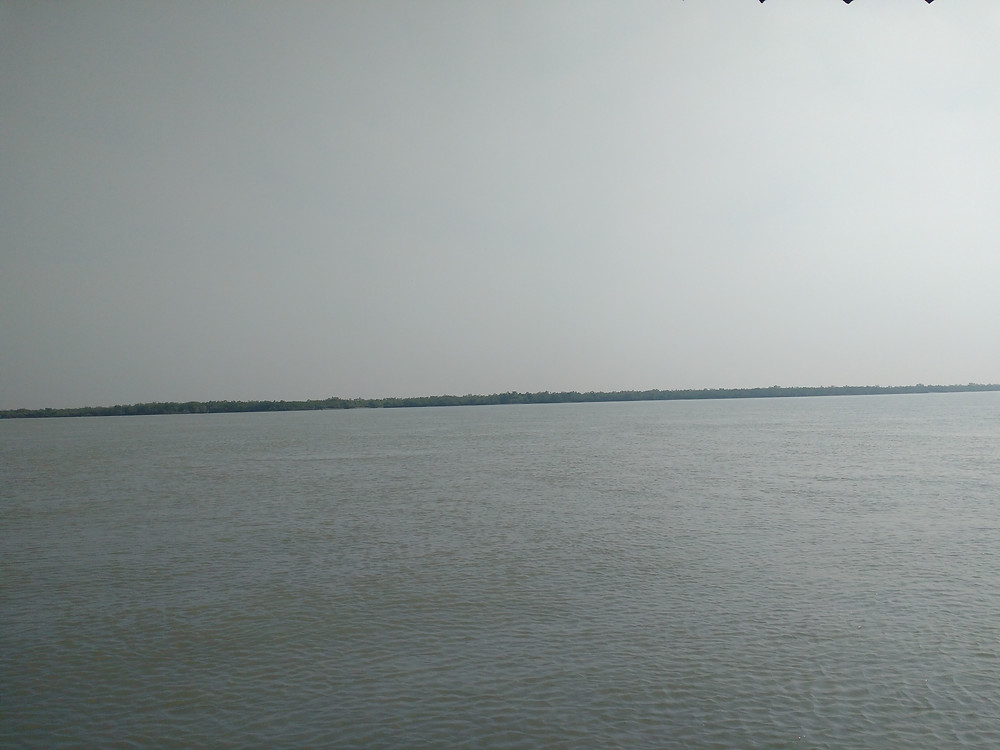 Mangroves from far distance