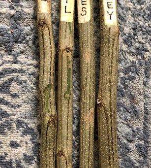 Plant Label Sticks