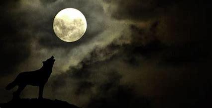 Wolf Moon by Lorraine Riess