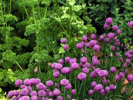 From Lynn's Garden