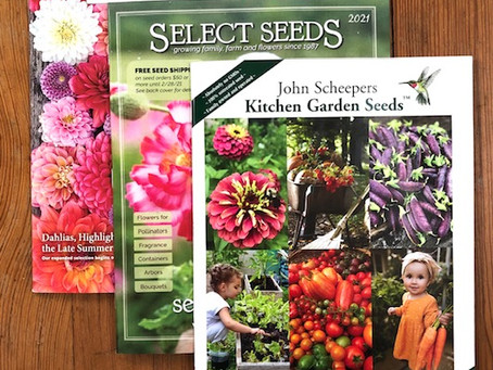 Seed Packets!