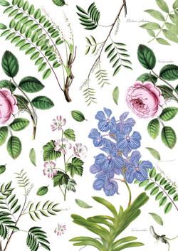 botanica-matrimonium-02