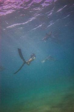 海中を泳ぐ姿