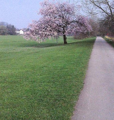 Blossom Tree Bicycle Path Postcard