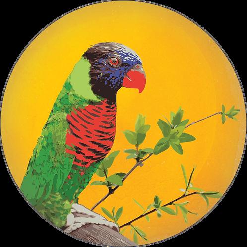 브라질 옐로우 버번