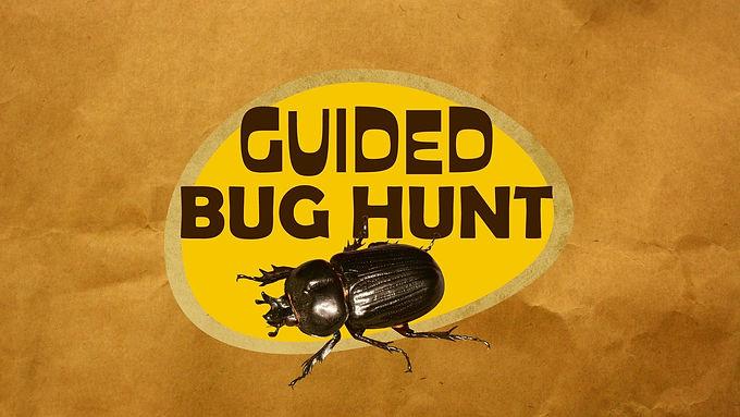 Creepy Crawly Friends: Bug Hunt