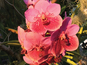 Art and orchids come together at Stowe Garden