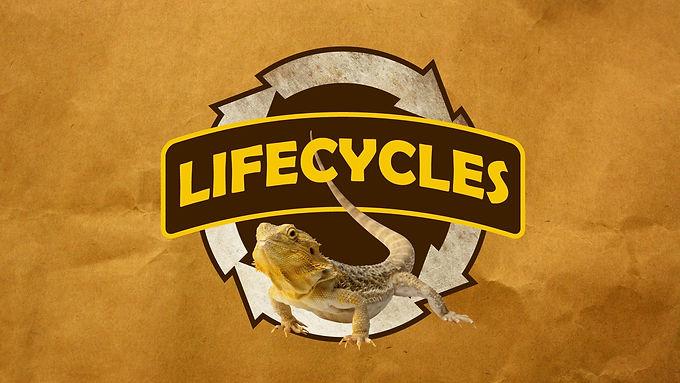 Creepy Crawly Friends: Life Cycles