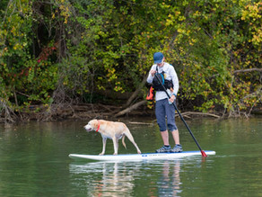 8 Dog-Friendly Adventures in Gaston County