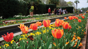 Daniel Stowe Botanical Garden Now Open to the Public