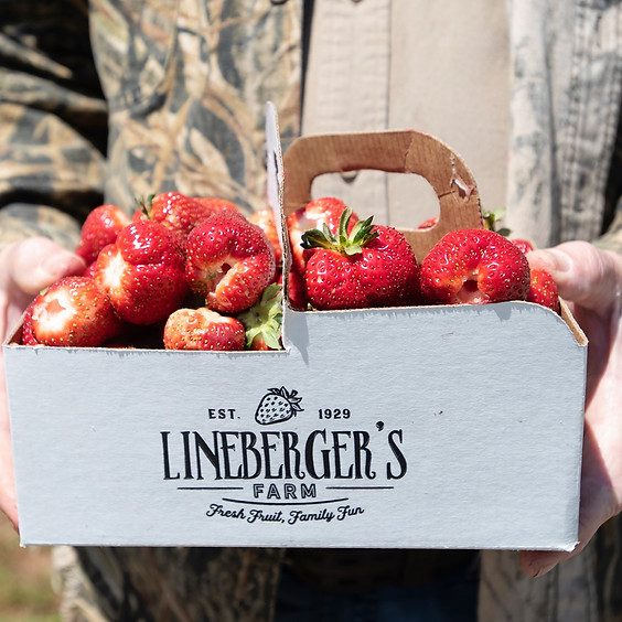 Lineberger Maple Springs Farm: First Strawberries Lesson