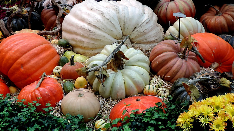 Pumpkin Patch at Lineberger's Farm