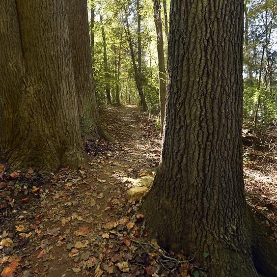 History Hike On Seven Oak Preserve Trail