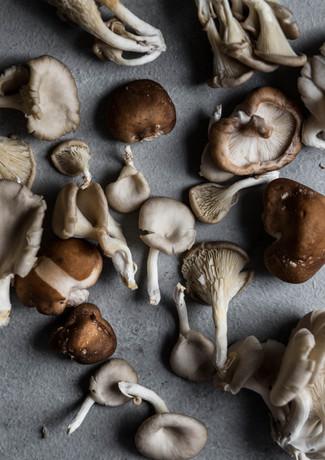 Cogumelos 11.jpg