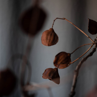 Ensaio Inverno - Folhagens 5.jpg