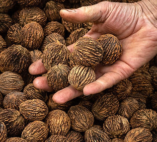 BlackWalnuts_CAImages.jpg