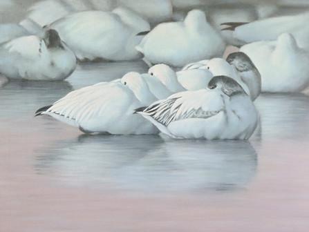 Birds in Art 2020-21