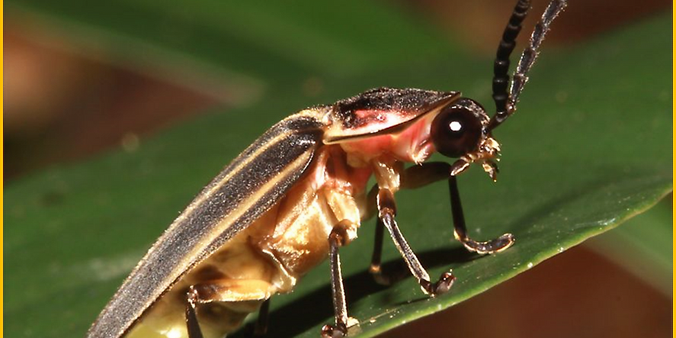 The Downward Spiral: Insect Declines and Why They Matter