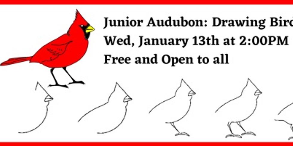 Junior Audubon-Drawing with Birds (Cardinal)