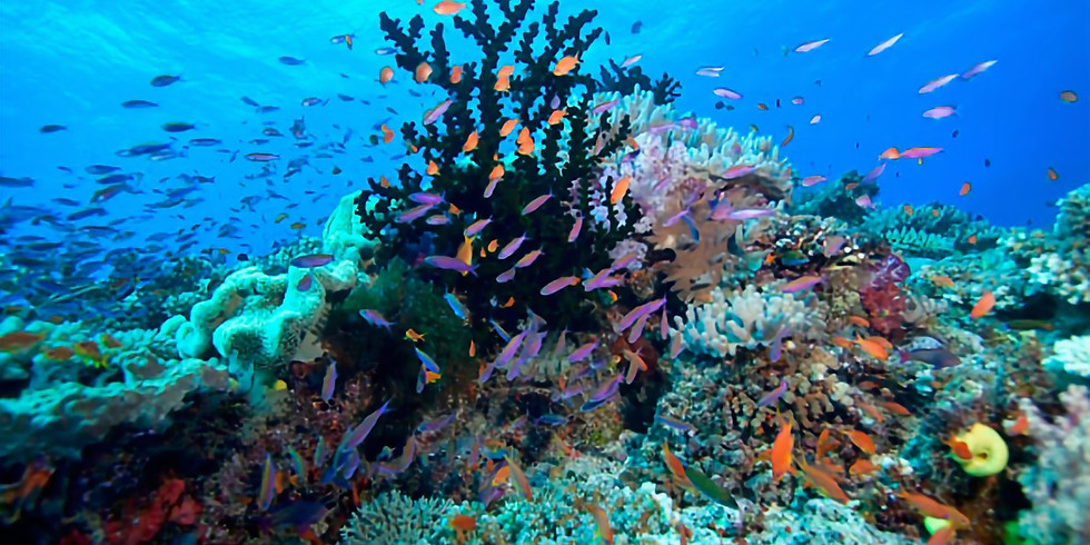 Diving in the Heart of the Coral Triangle