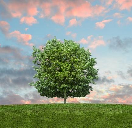 Puude hooldus