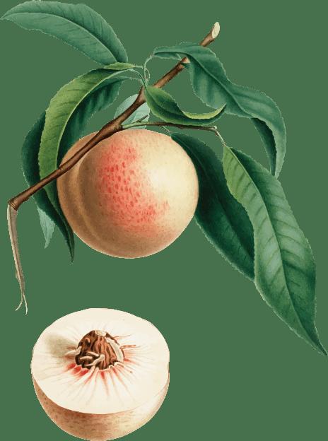 peachAsset-9.png