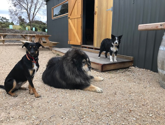 Dogs of the distillery.jpg