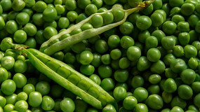 SNOW PEAS: EAT THEM IN THE POD FOR A GREAT SOURCE OF INSOLUBLE FIBRE