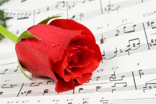 Floral 098-Rosa com partitura