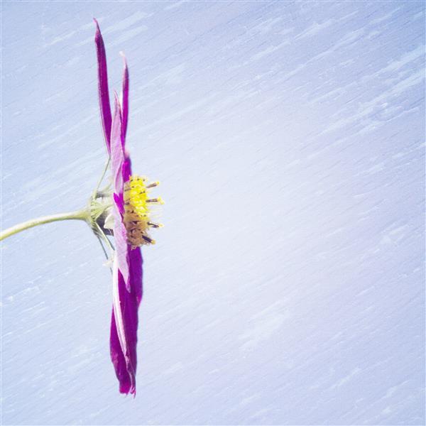 Artes visuais 115-Floral.jpg