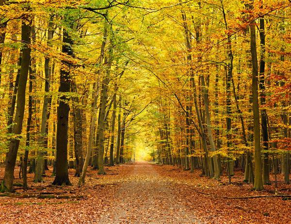 Floresta Natureza 232