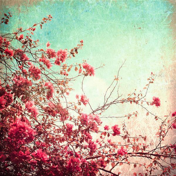 Floral 144-Cerejeira japonesa