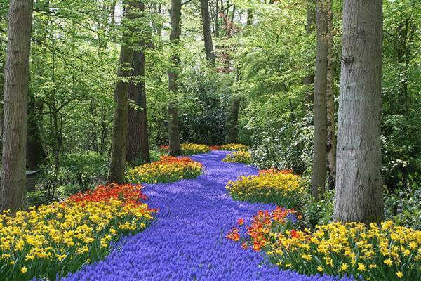 Floresta Natureza 210