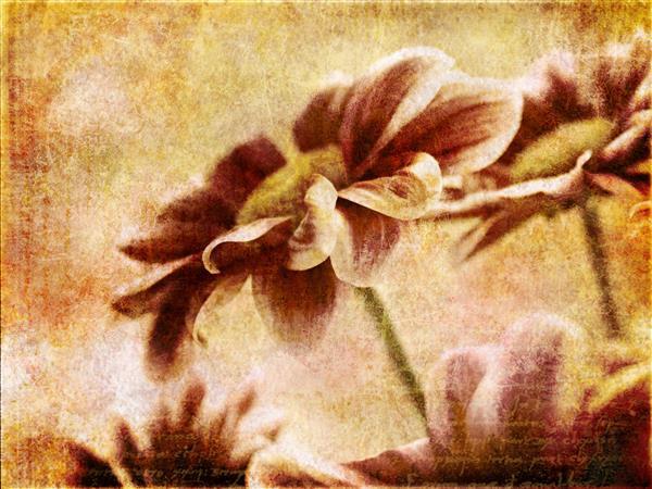 Floral 127