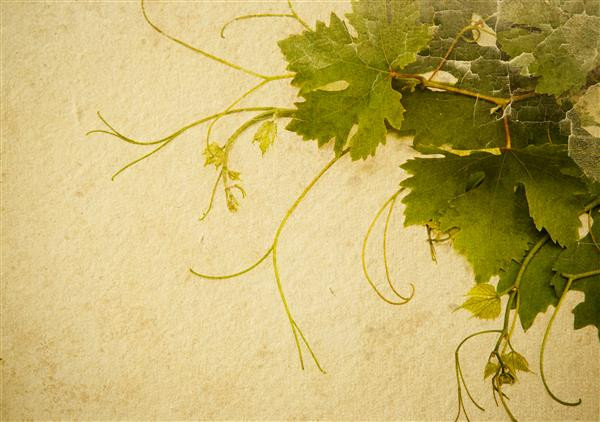 Floral 129-Arte com folha de parreira