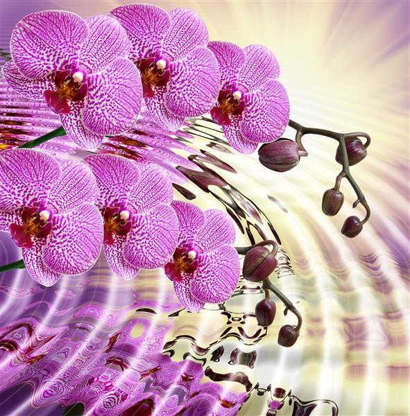 Floral_174-Flor_da_orquídea