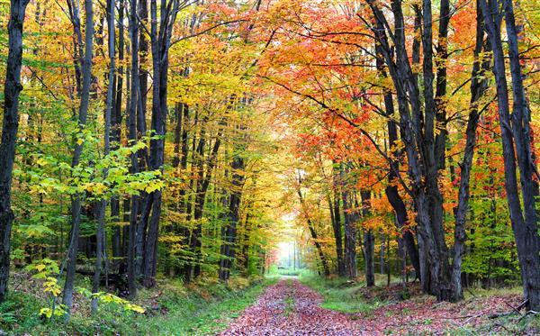 Floresta Natureza 121