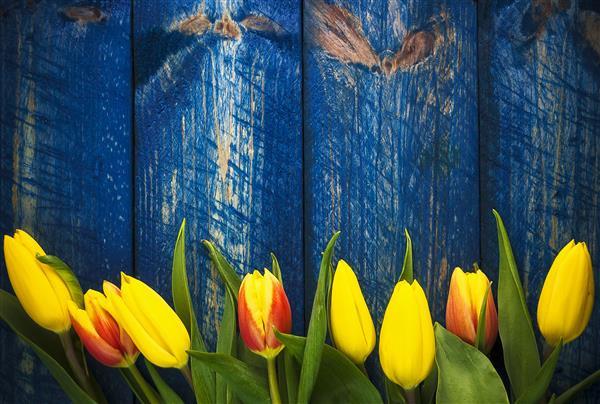 Floral 148-Tulipas