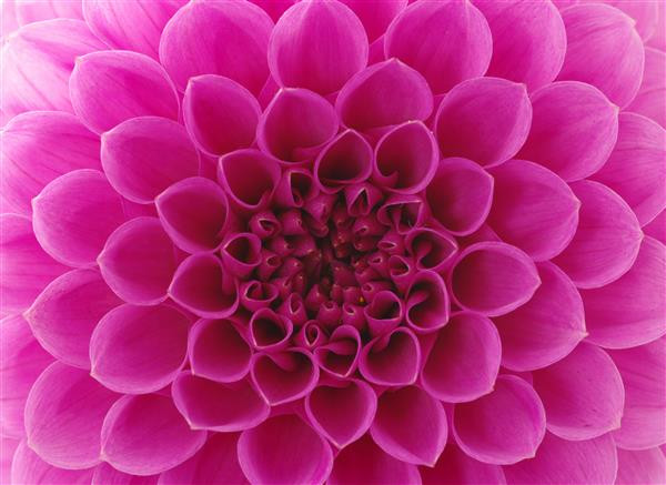 Floral 175-Flor abstrata