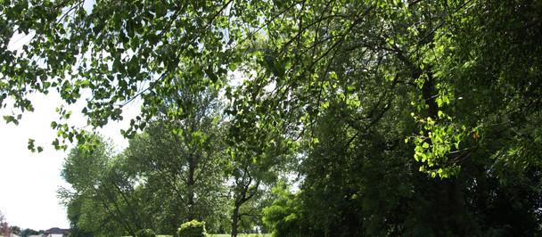 Platt Fields Bat Walk
