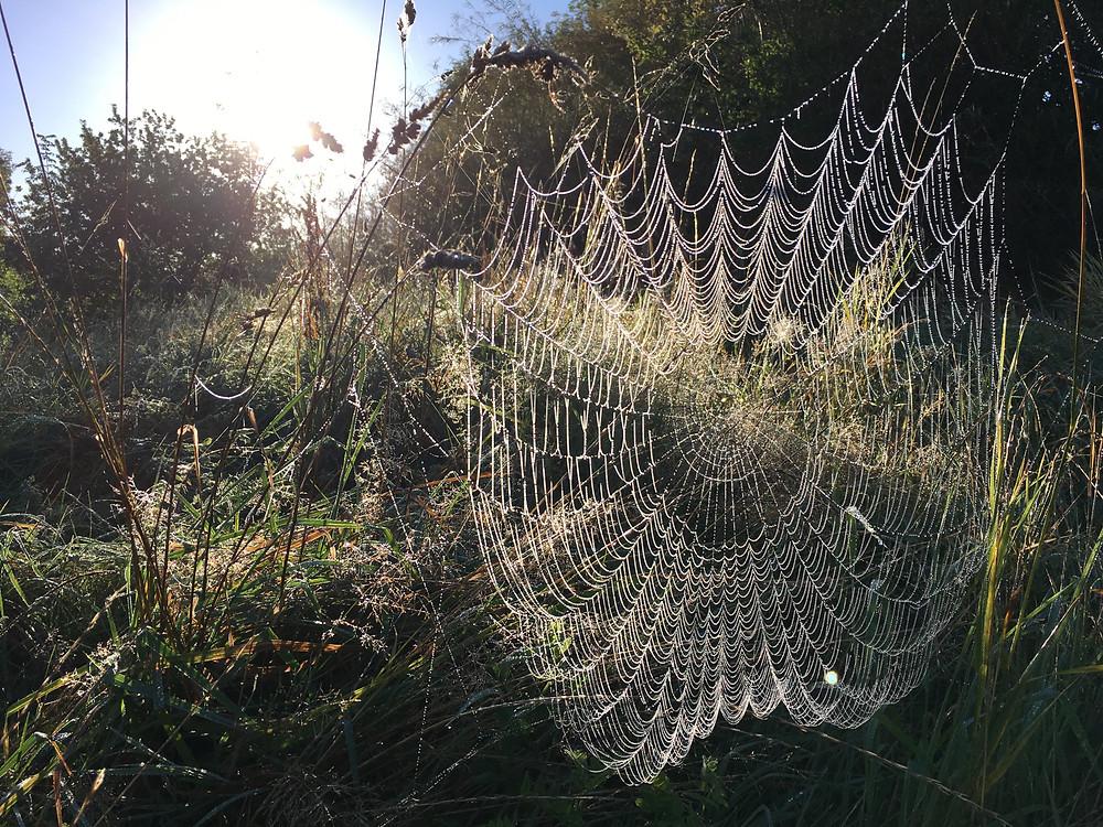a backlit photo of a giant cobweb