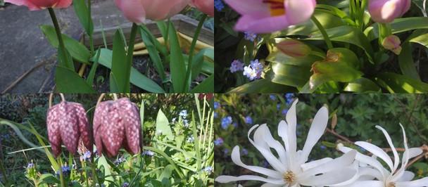 Garden Joy