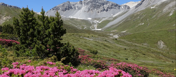 Spring Flowers in the Alps