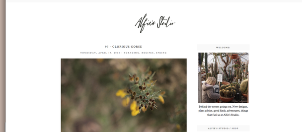 Alfies Studio & Blog