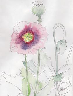 fleeting flowers...
