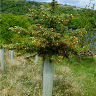 Releasing Trees