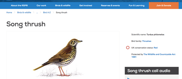 Song Thrushes in South Manchester