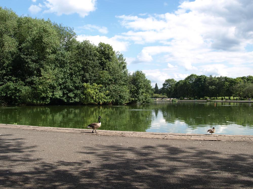 Farside Platt Fields Lake